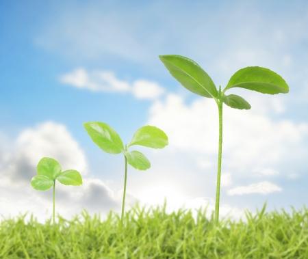 Ideeën plantengroei in een gras