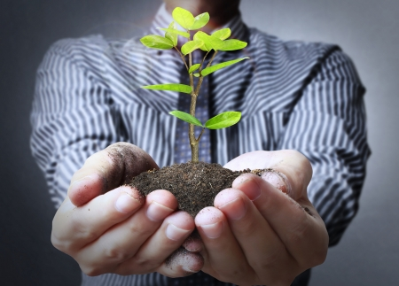 small plant: plant in a hand businessmen