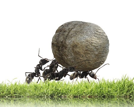 hard worker: lavoro di squadra, squadra di formiche lancia pietra in salita Archivio Fotografico
