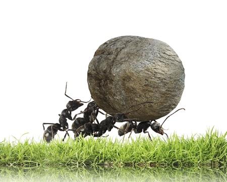 trabajando duro: trabajo en equipo, el equipo de las hormigas rueda de piedra cuesta arriba