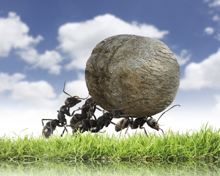 en mont�e: le travail d'?quipe, l'?quipe de fourmis roule la pierre mont?e
