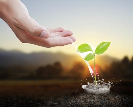 성장: 캔 물을 붓는 녹색 식물에 물을