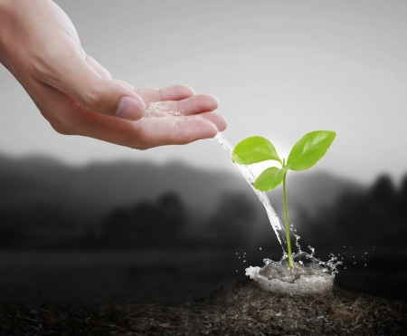 thrive: watering can pouring water green plant  Stock Photo