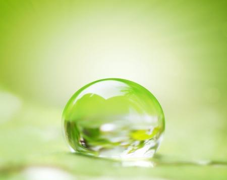 kropla deszczu: zielony liść i krople wody na nim płytkie dof