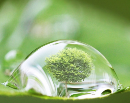 protection concept: tree in water drop on the leaves  Stock Photo