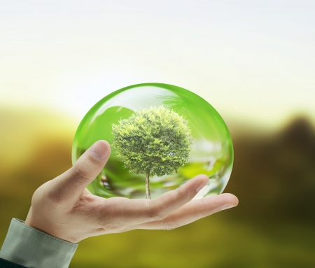 green life: Small tree in a hand businessman  Stock Photo