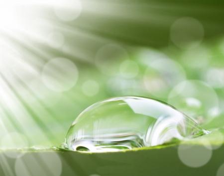 superficie: gota de agua en las hojas Foto de archivo