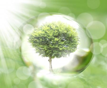 water drop on the leaves 版權商用圖片 - 24881891