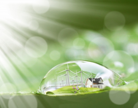 waterdruppel op de bladeren