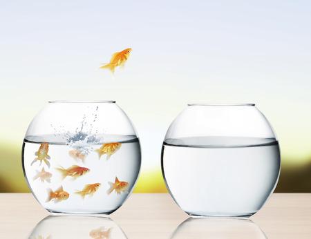 Goldfish springen aus dem Wasser Standard-Bild - 26374307