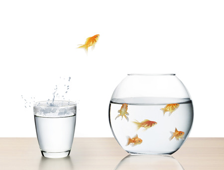 tank fish: goldfish jumping out of the water