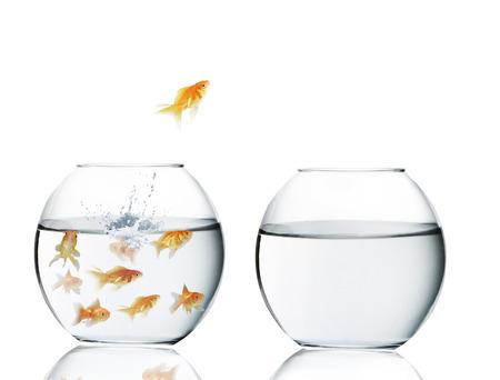 水の外に飛び出す金魚