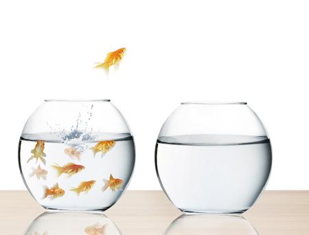 goudvis springen uit het water