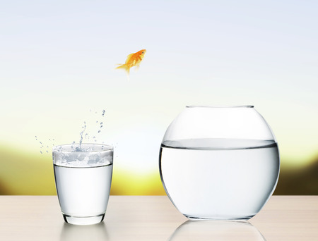 goldfish jumping out of the water Stock Photo - 26374640