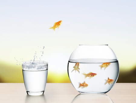 business survival: goldfish jumping out of the water