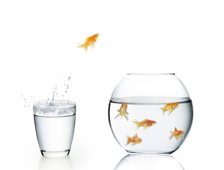goldfish jump: goldfish jumping out of the water