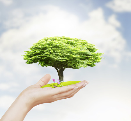 prosperous: Small tree in the hand  Stock Photo