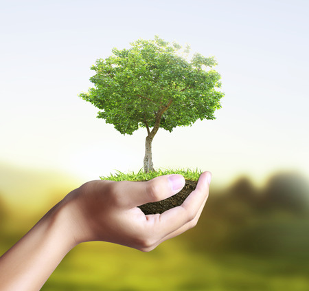 prosperous: Small tree, plant in the hand  Stock Photo