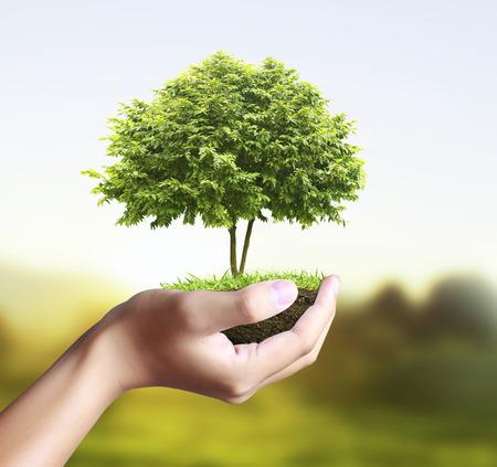 小さなツリーと、手の中の植物