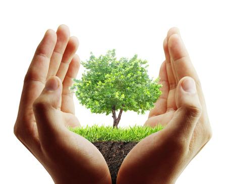 小さい木、植物、手で