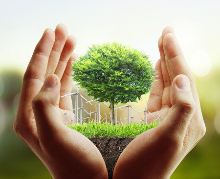Small tree, plant in the hand  Stock Photo