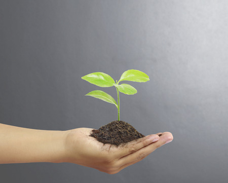 hands holding tree: man Hands holding a green young plant,small tree Stock Photo