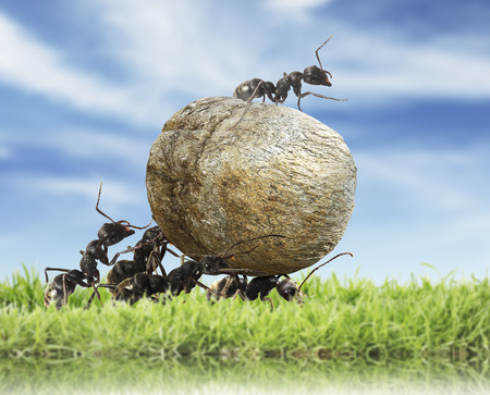 team of ants rolls stone Foto de archivo