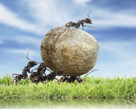 stone work: team of ants rolls stone Stock Photo