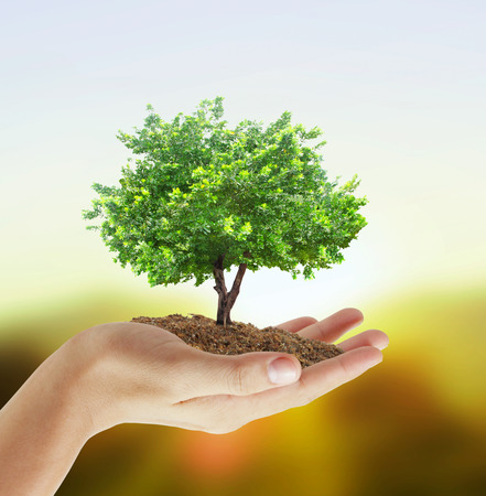 hands holding tree: Human hands holding a tree