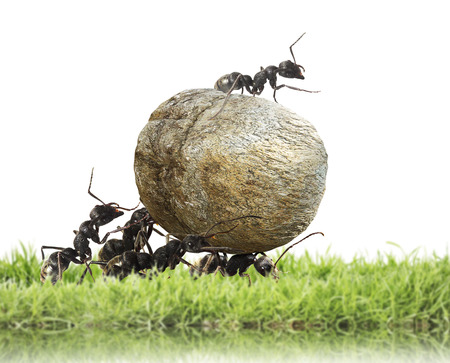 team of ants rolls stone Stock Photo