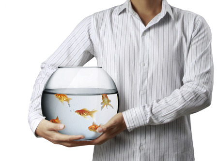 goldfish jump: man holding goldfish Stock Photo