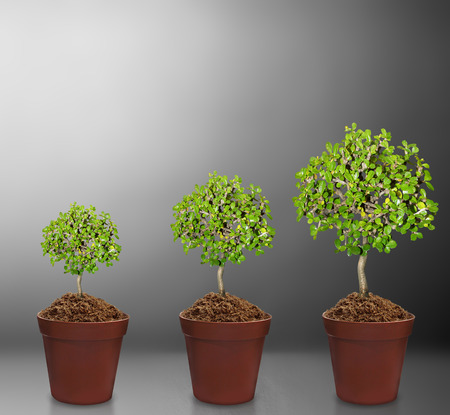 plant in pot Isolated over gray Stock Photo