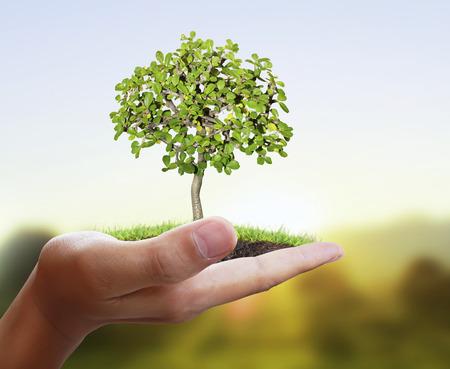 raices de plantas: Hombre que sostiene la planta en una mano
