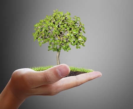 hand holding: Man holding plant in a hand