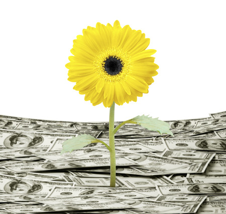 white interest rate: young plant money growth concept