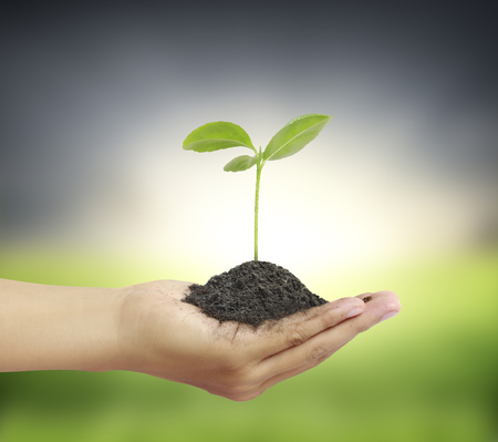 nurture: Man holding plant in a hand