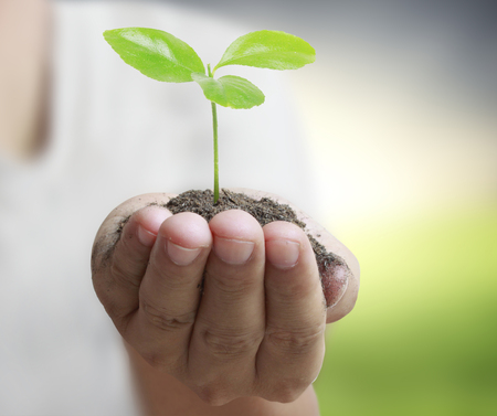 plant hand: Man holding plant in a hand