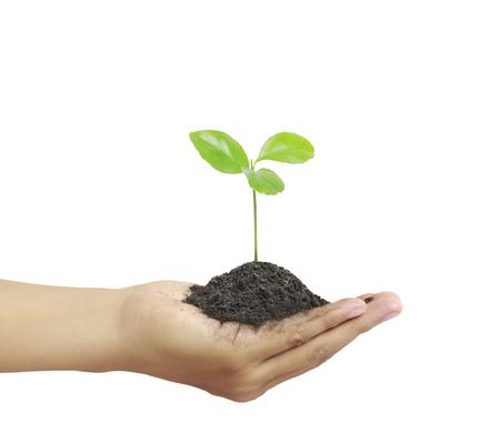 crecimiento planta: Hombre que sostiene la planta en una mano