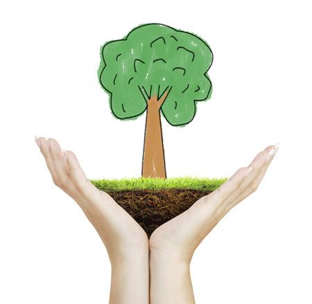 Mains humaines tenant un arbre