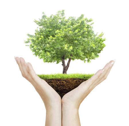 siembra: Manos humanas sosteniendo un árbol