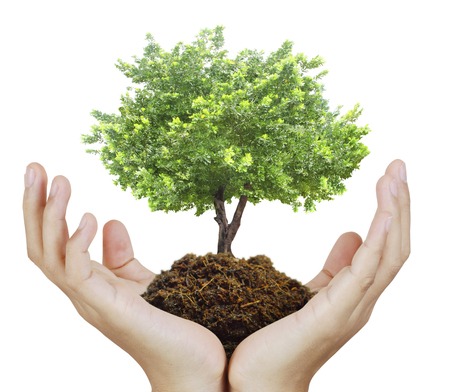 feuille arbre: Mains humaines tenant un arbre