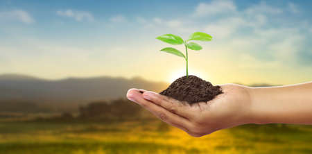 Human hands holding sprout young plant.environment Earth Day In the hands of trees growing seedlings 版權商用圖片 - 157236596