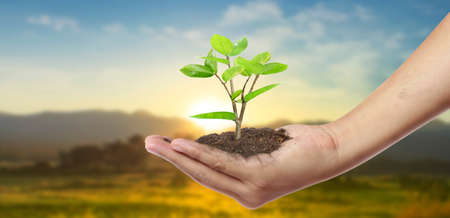 Human hands holding sprout young plant.environment Earth Day In the hands of trees growing seedlings 版權商用圖片 - 157041128
