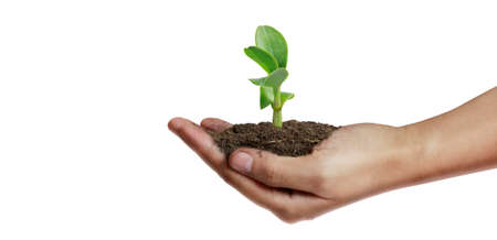 Human hands holding sprout young plant.environment Earth Day In the hands of trees growing seedlings 版權商用圖片 - 157236598