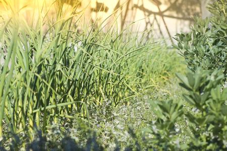 Beautiful summer plantation background Imagens