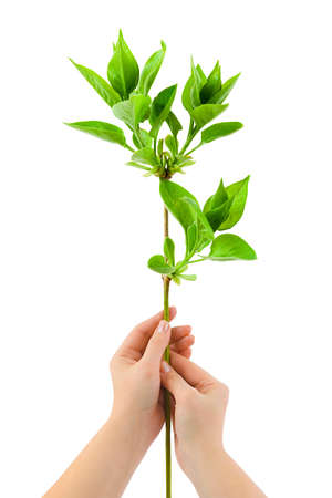 Hands and plant isolated on white background Stock Photo - 4129721