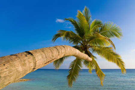 Bending palm tree on tropical beach, vacation background photo