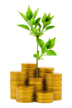 investment solutions: Monedas y plantas aisladas sobre fondo blanco