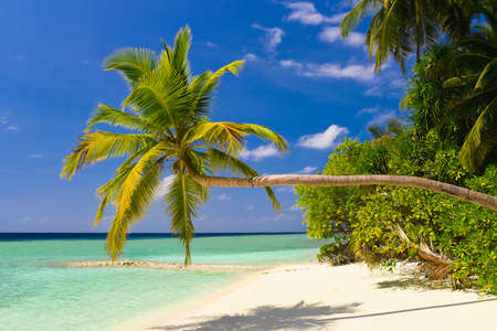 sloping: Bending palm tree on tropical beach, vacation background Stock Photo
