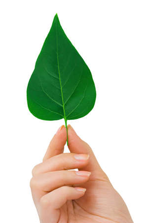 Hand and leaf isolated on white background Stock Photo - 4589743